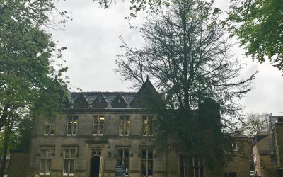 Cedar Tree in Uppermill Library Park to be removed due to Sirrococcus